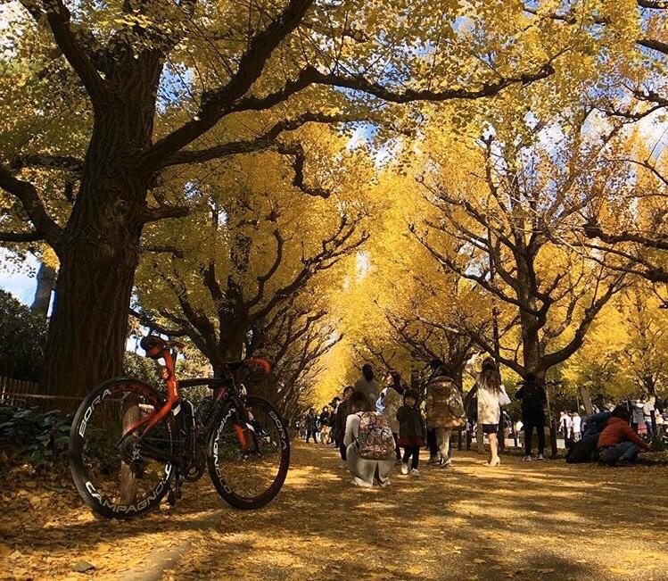 青山外苑銀杏並木