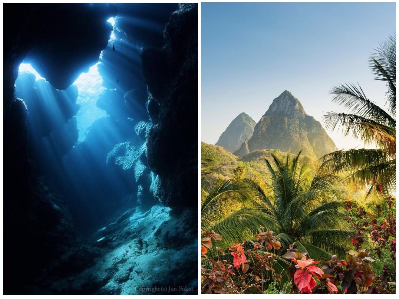 ジャングルと深海